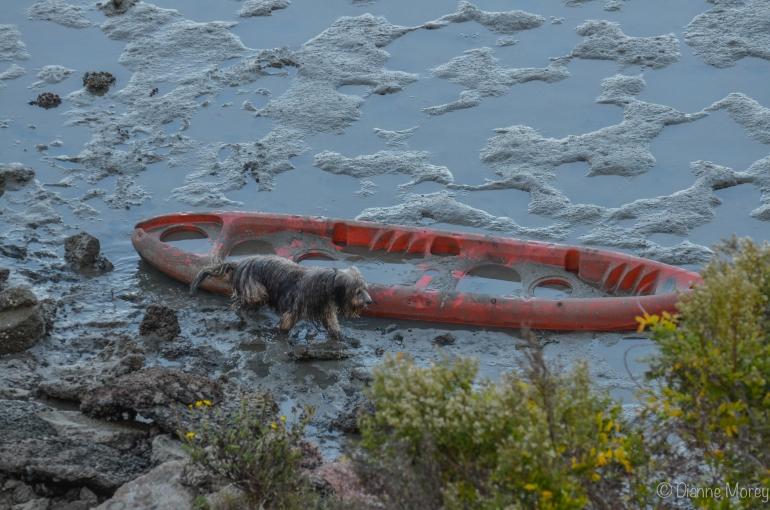 mudboatOctober 23, 2014