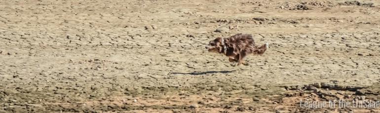 desertdogpuppySeptember 27, 2015
